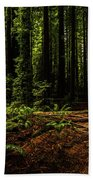 The Light In The Forest No. 2 Beach Towel