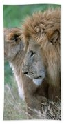 The Lion And His Lioness Beach Towel