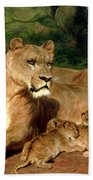The Lions At Home Beach Towel