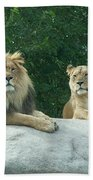 The Lions Beach Towel