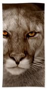 The Look - Florida Panther Beach Towel