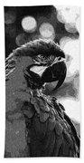 The Macaw Beach Sheet