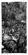 The Monastery Tree Beach Towel