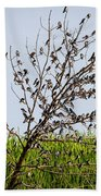 The More The Merrier- Tree Swallows  Beach Towel