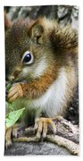 The Most Adorable Baby Squirrel Beach Towel