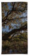 The Oak By The Side Of The Road Beach Towel
