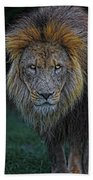 The Old Lion Beach Towel