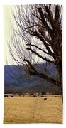 The Old Tree In Winter Beach Towel