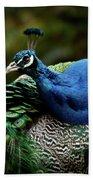 The Peacock - 365-320 Beach Towel
