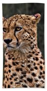 The Pensive Cheetah Beach Towel