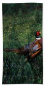 The Pheasant In The Autumn Colors Beach Towel
