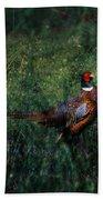 The Pheasant In The Autumn Colors Beach Sheet