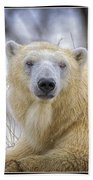 The Polar Bear Stare Beach Towel