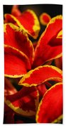 The Reds Of Winter Beach Towel