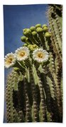 The Saguaro Cactus  Beach Towel