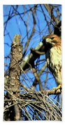 The Search Red Tail Hawk Art Beach Towel