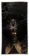 The Spider  And The Fly Beach Towel