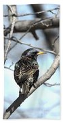 The Starling Beach Towel
