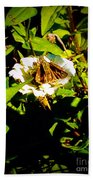 The Tiniest Skipper Butterfly In The Garden Beach Towel