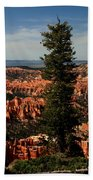 The Tree In Bryce Canyon Beach Towel