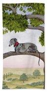 The Tree Whippet Beach Sheet