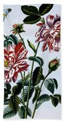 The Variegated Rose Of England Beach Towel