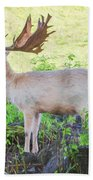 The White Stag 2 Beach Towel
