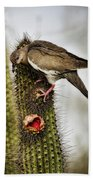The White Winged Dove  Beach Towel