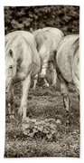 The Wild Horses Of Shannon County Mo 7r2_dsc1111_16-09-23 Beach Towel
