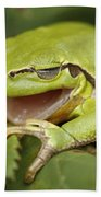 The Yawning Tree Frog Beach Towel