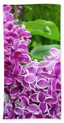 This Lilac Has Flowers With A White Edging.1 Beach Towel