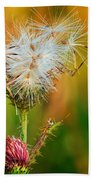 Thistle Seeds Beach Towel