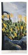 Thornton: Aloe Beach Towel
