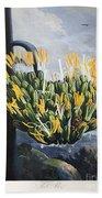 Thornton: Aloe Beach Sheet