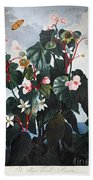 Thornton: Begonia Beach Towel