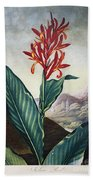 Thornton: Indian Reed Beach Towel