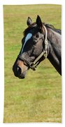 Thoroughbred Portrait Three Beach Towel