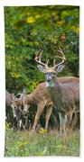 Three Bucks_0054_4463 Beach Towel
