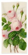 Three Centifolia Roses With Buds Beach Towel
