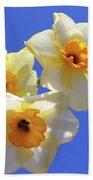 Three Daffodils Beach Towel