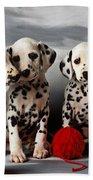 Three Dalmatian Puppies  Beach Towel