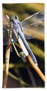 Three Dragonflies On One Reed Beach Towel