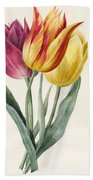 Three Lily Tulips  Beach Towel