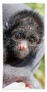 Three Month Old Spider Monkey Beach Towel