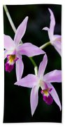 Three Orchids Beach Towel