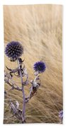 Three Purple Echinops Beach Towel by Helga Novelli