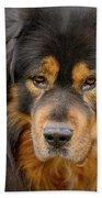 Tibetan Herding Dog Portrait Beach Towel by Heiko Koehrer-Wagner