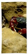 Tide Pool Crab 1 Beach Towel