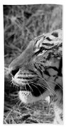 Tiger 2 Bw Beach Towel