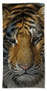 Tiger 5 Posterized Beach Towel